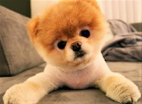 #I Know, I'm Cute...
