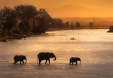 Elephants cross Ewaso Ngiro river in Kenya at sunset