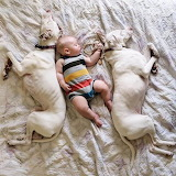 2 DOGS & A bABY