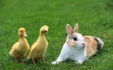 Bunny-pictures
