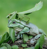 Mr Frog and friend