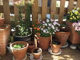 Kj garden deck