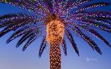 Christmas lights on palm tree. Temecula Valley. California