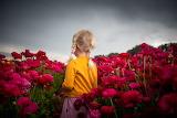 Summer, flowers, girl, child