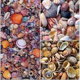 Many shells
