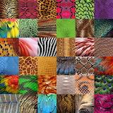 Animal Skin Collage
