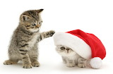 Kittens in Christmas costumes