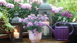 Balcony-lanthern, candle, flowers, watering can