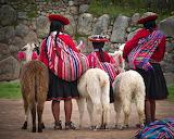 Llamas and girls