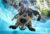 seth casteel-awesome-underwater-photography-of-dogs-4129 (2)