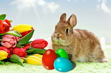 Easter, bunny, eggs, tulips