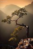 Zen Bonsai