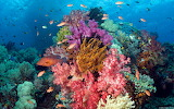 475465_indoneziya_podvodnyj-mir_rybki_korally_rif_1680x1050_(www