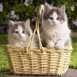 ☺ Cute pair...