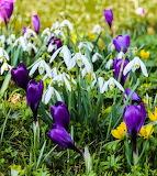 Promesse de printemps