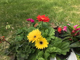 Spring planting flowers