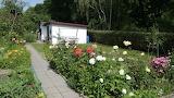 mein Garten Rosenzeit