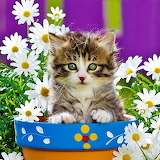 ☺Kitten and Daisies...