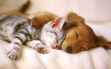 Dag-cat-sleeping