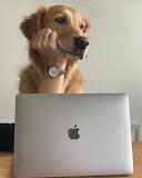 dog girl computer