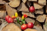 tulips & apples