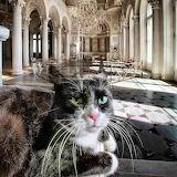 Cat living in the Hermitage (Saint Petersburg)