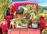 Stowaway dogs
