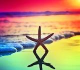 StarfishSunset