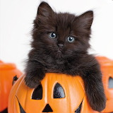 Little Black Kitten...