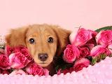Valentine 1.............................................x