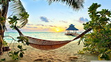 Beach, hammock, trees, sand, sea
