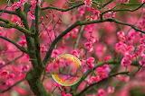 BlossomsAndBubble
