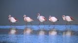 Birds 16
