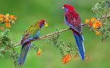 Flowers, birds, branches, bright, pair, parrots, exotic, birds,