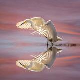 Garsa - Heron