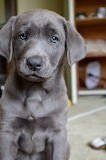 Perfect Puppy