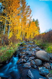 Aspens by the creek