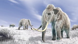 Woolly Mammoth Hairy Elephants Ice Age