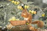 Apple Harvest by Geert Weggen