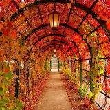 #Lit Autumn Arch- Pinterest