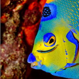 Neon Goby fish from Microsoft Jigsaw by auricle99