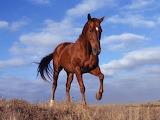 Horse-animals