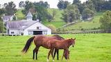 Kentucky - Raising Horses