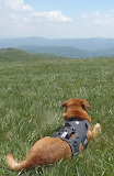 Max Patch Trail Dog 500 Dollar Fine