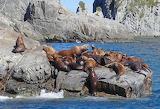 a rookery of sea lions of Kamchatka Bukhta Russkaya