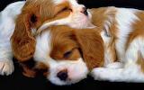 Cachorros dormilones
