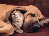 Love-dog+cat