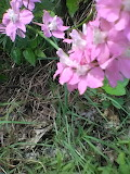 Pink flowers in the park