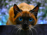 ~Hello, Blue Eyes!