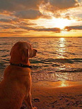 Dog enjoying sunset on beach